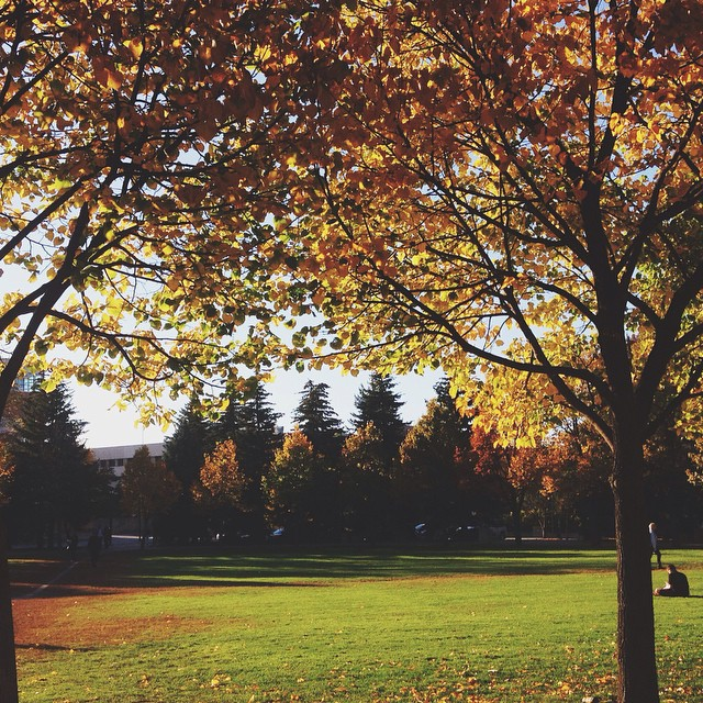 Oh my God - autumn on campus is so pretty I could cry.